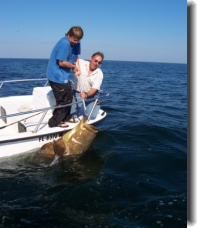 400 pound Goliath Grouper and Capt. Tony Murray