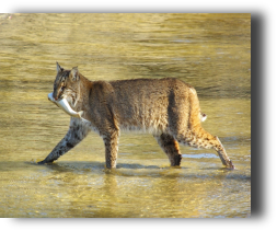 Bobcat/Mullet at the Refuge - every trip is different - Guaranteed!